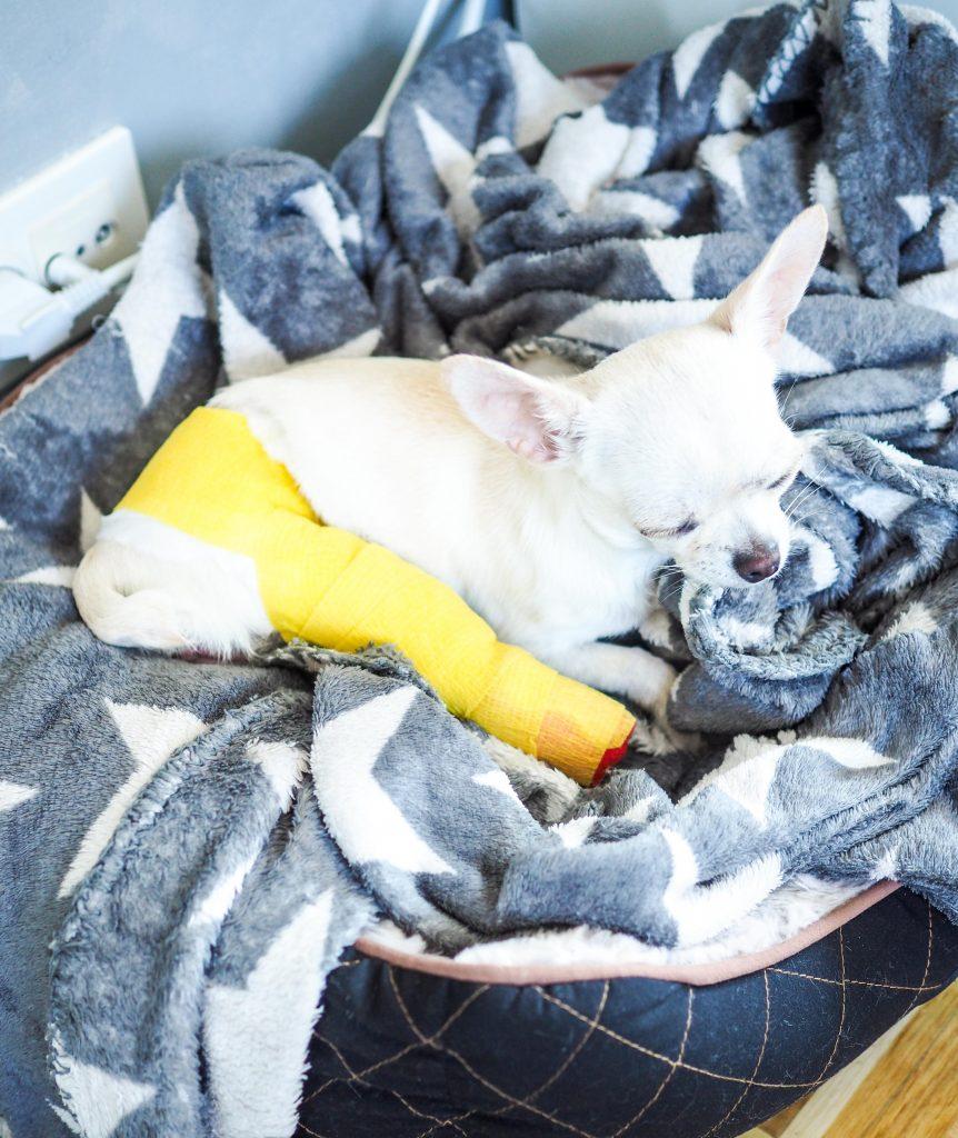 koiran jalka murtunut
