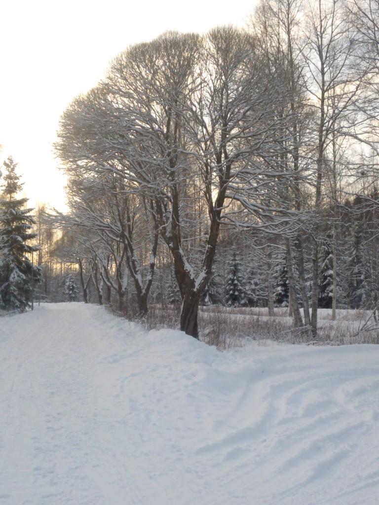 """""""Lenkkipolun"""" alku. Ihana kuja niin kesäisin kuin talvisin! :)"""