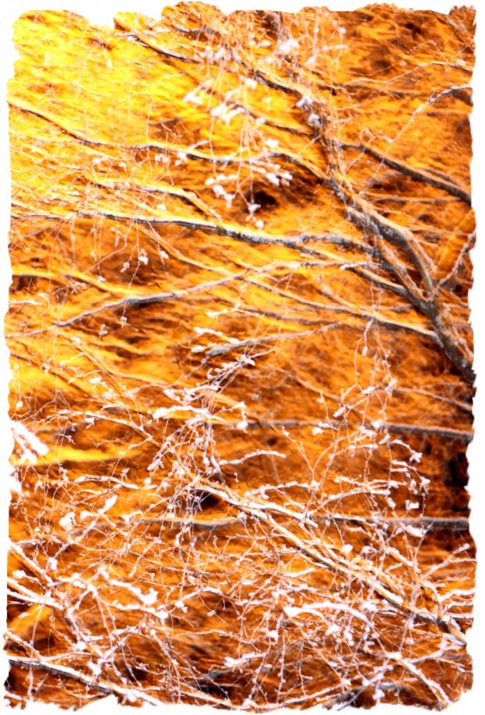 Samalla tuli napattua kuva lumisesta puusta, kun siihen osui kauniisti katuvalo.