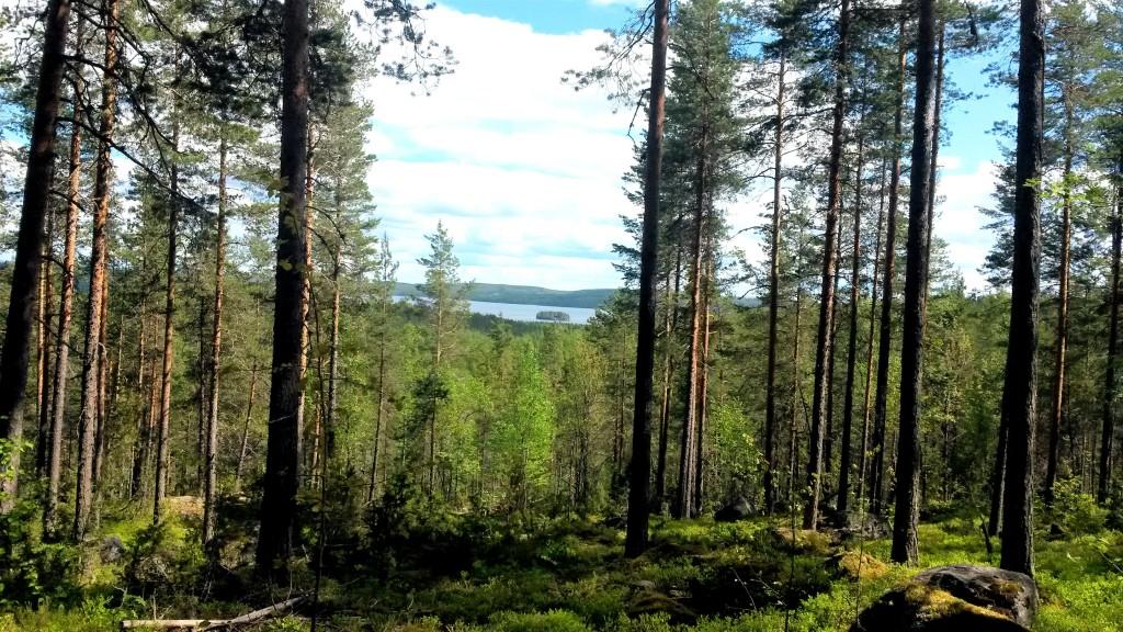 Testissä Jyväskylän ulkoliikuntapaikat osa 2: Keljonkankaan liikuntapuisto