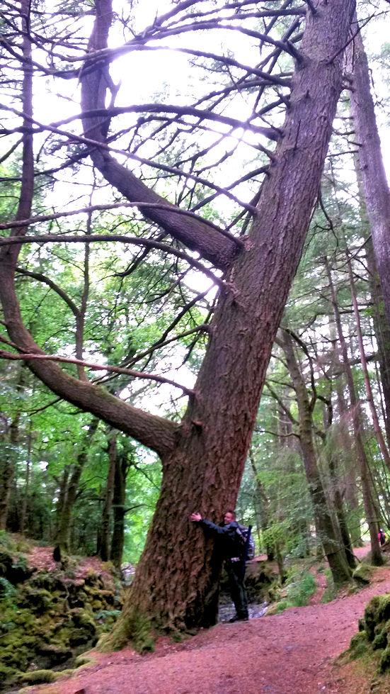 Ihastelimme valtavan kokoisia puita.