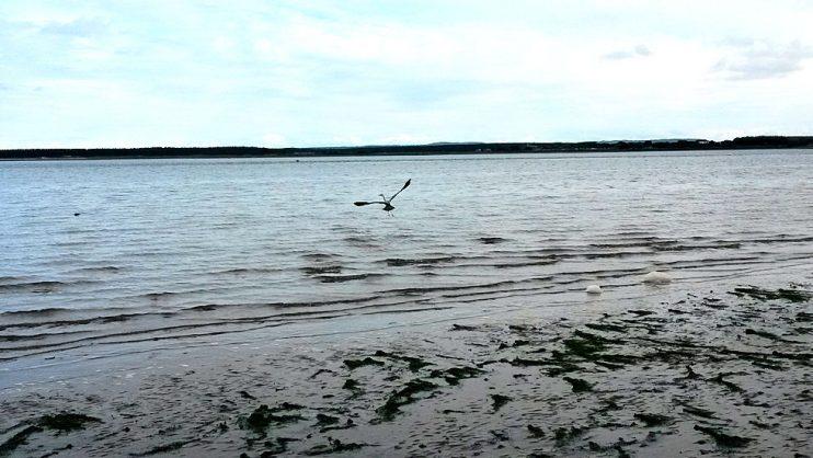 Nähtiin rannalla haikara. Kovasti koitettiin bongata hylkeitä ja delfiinejä, joita olisi ollut mahdollisuus myös nähdä, mutta ei osunut meidän silmään.