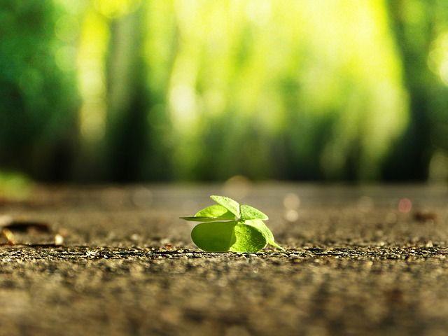 four-leaf-clover-3336774_640.jpg