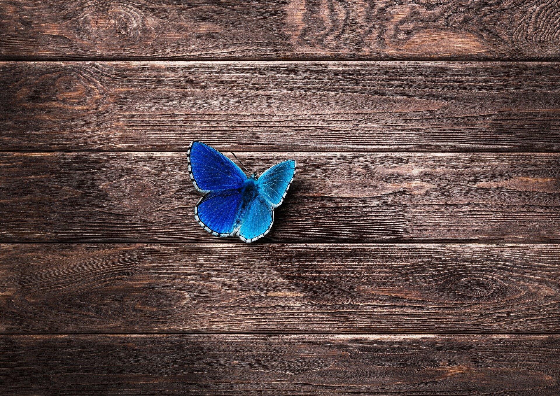 Laudan päällä sininen perhonen.