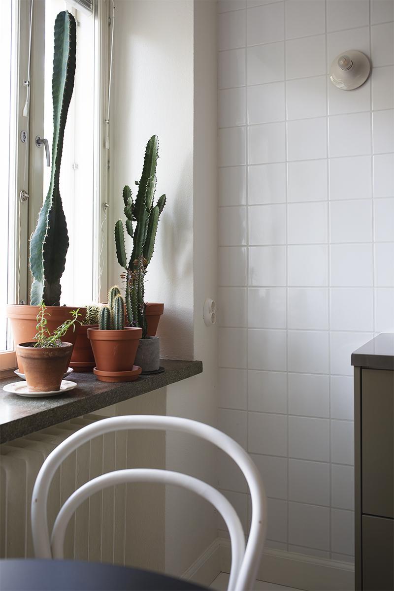 Kokoelma kaktuksia