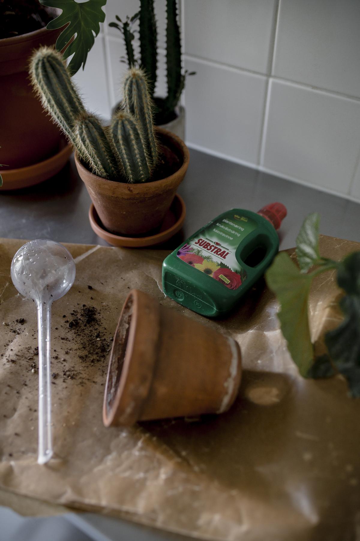kasvien mullanvaihto