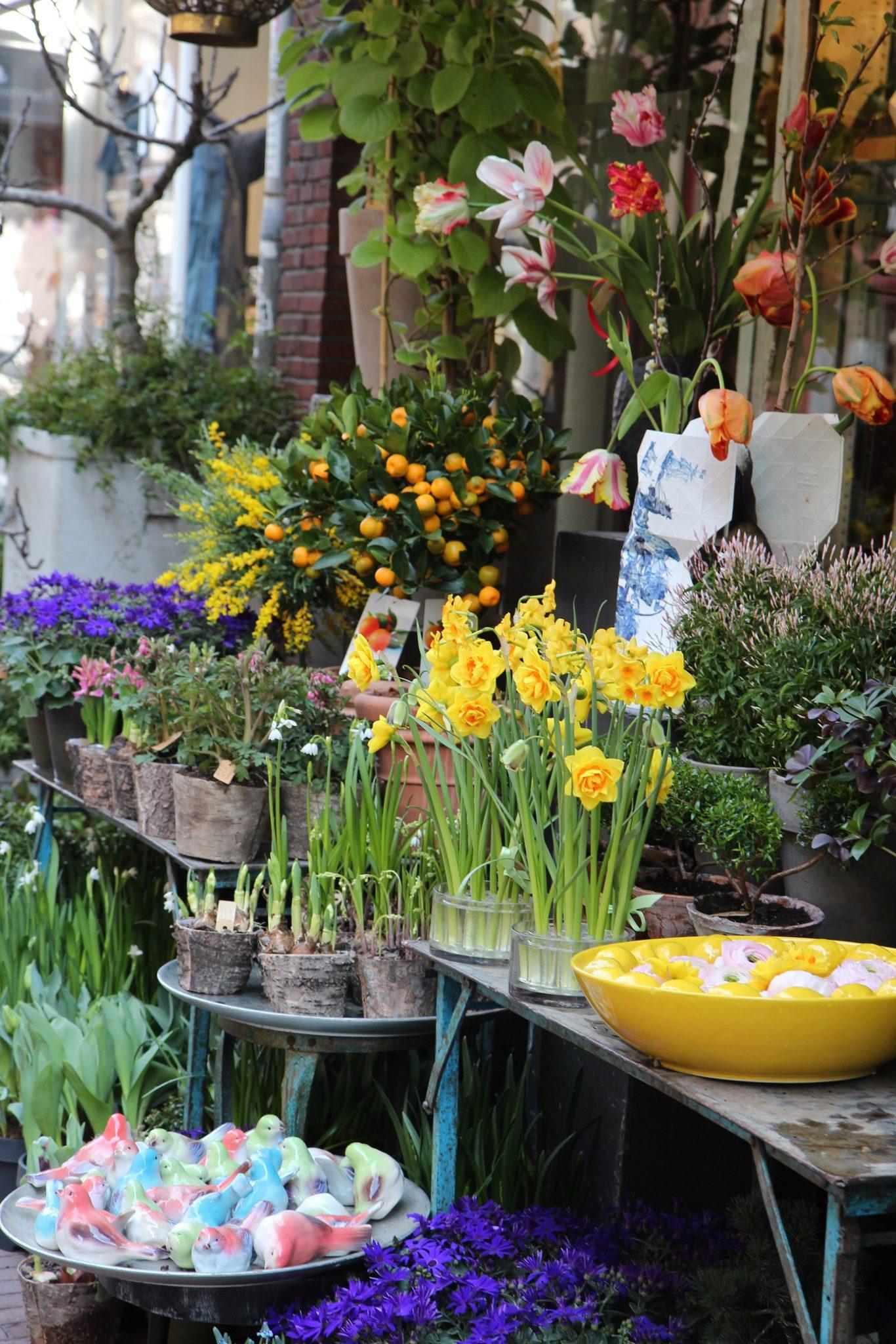 Amsterdamin kukkaloistoa
