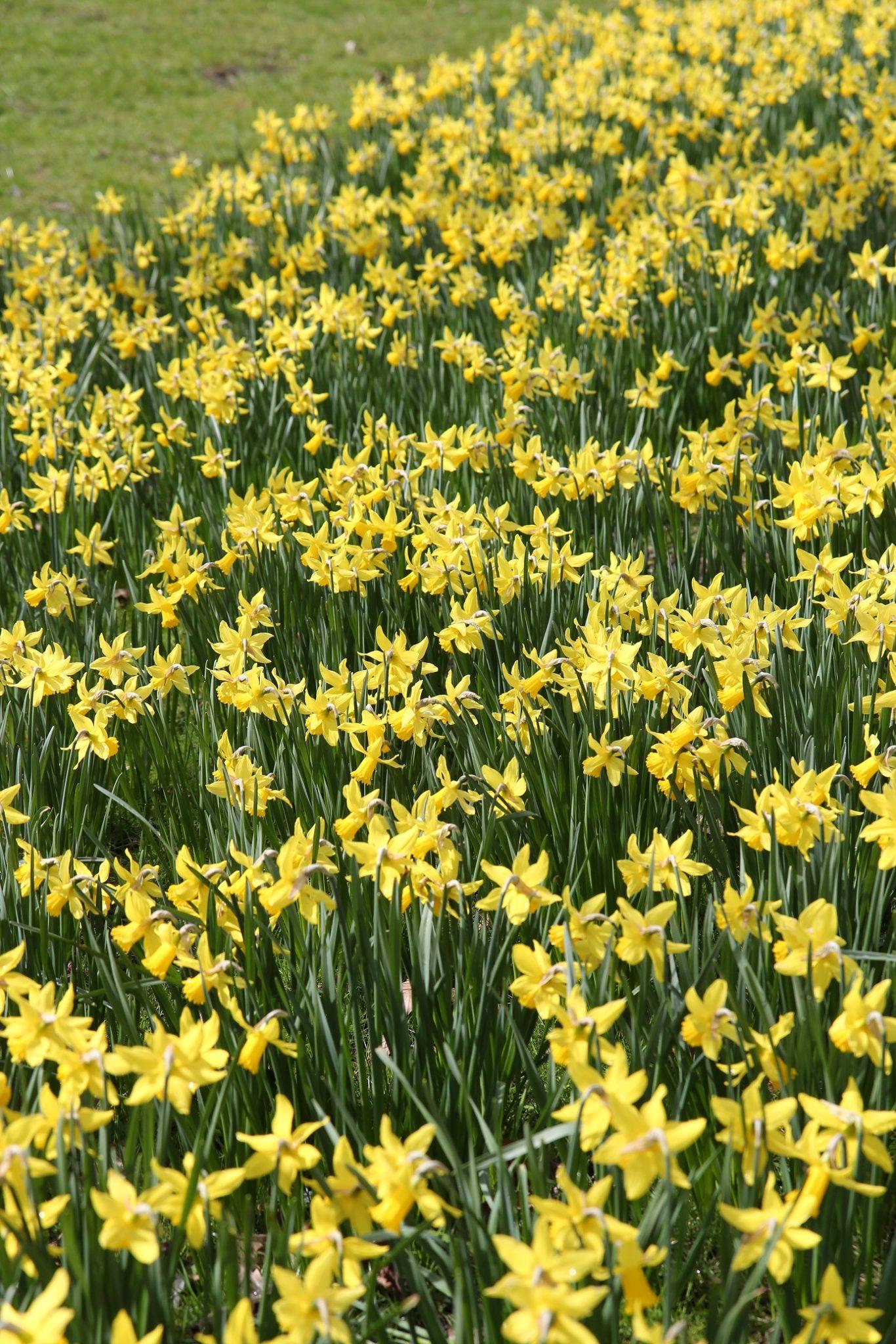 Pääsiäisen kukkaloistoa