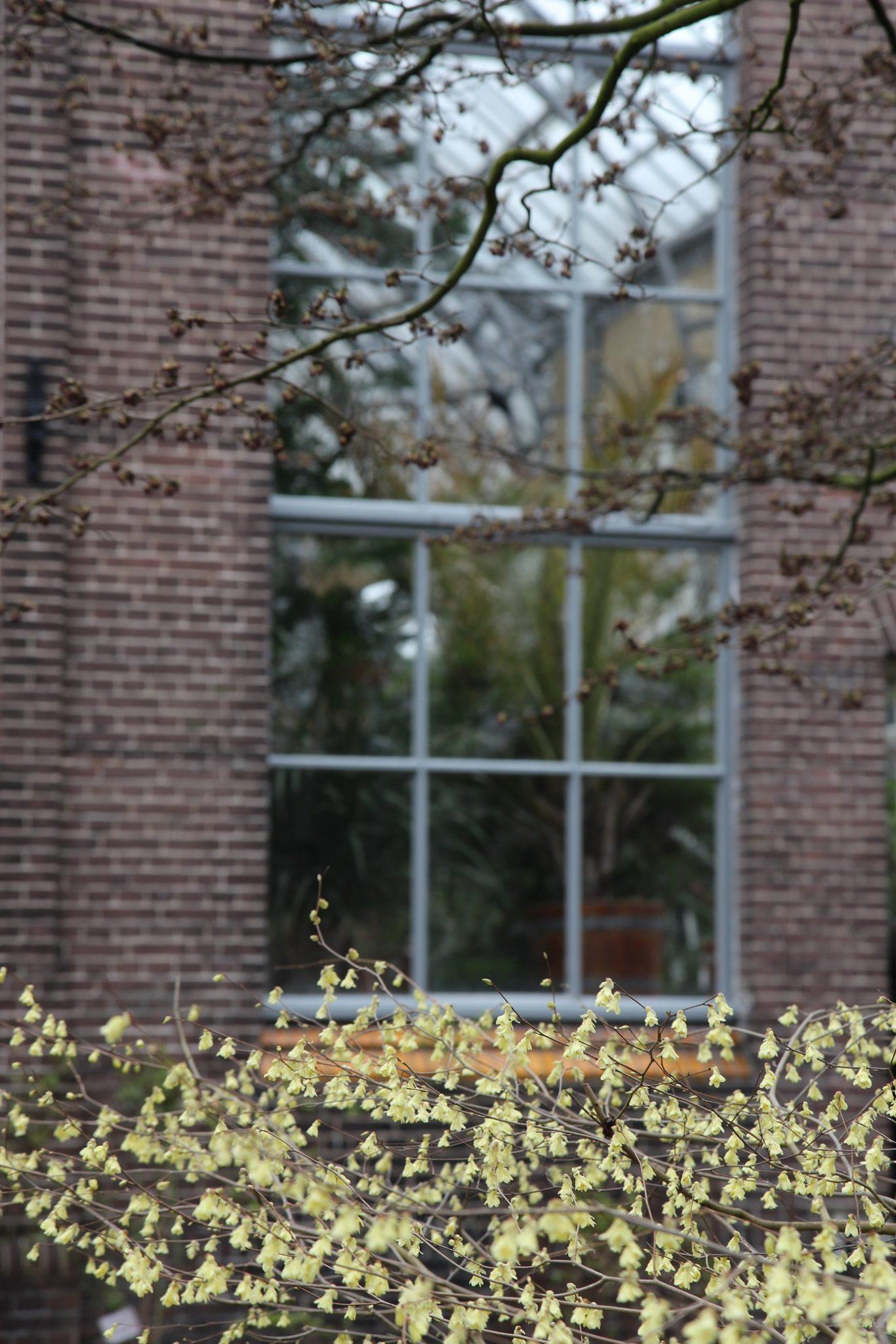 Amsterdam, kasvitieteellinen vol 2