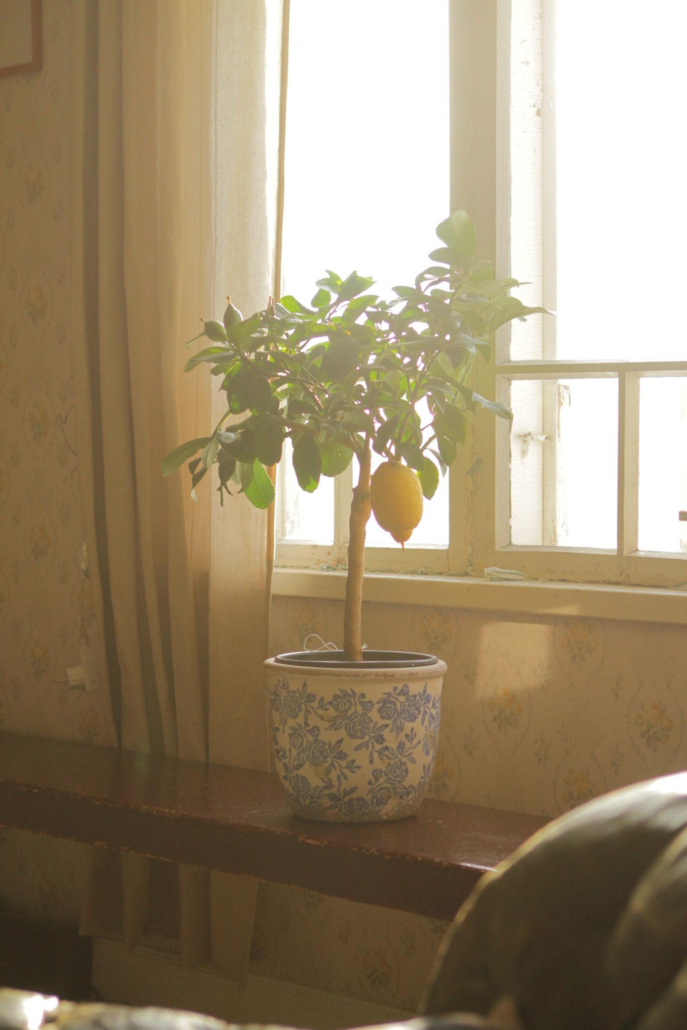 Kolumni – Kuolevien kasvien arvoitus