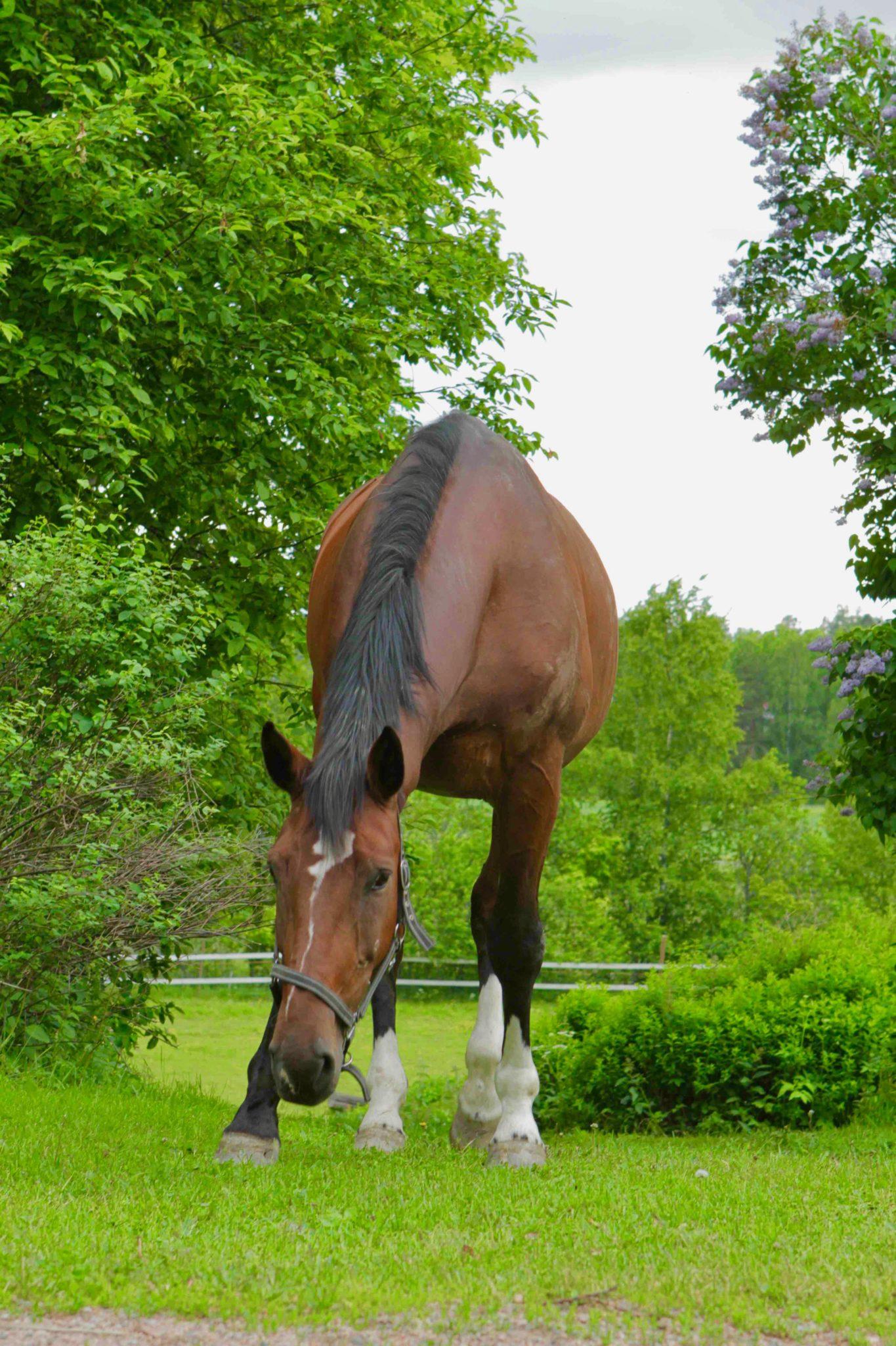 Raha ei tuo onnea – paitsi hevosenomistajalle