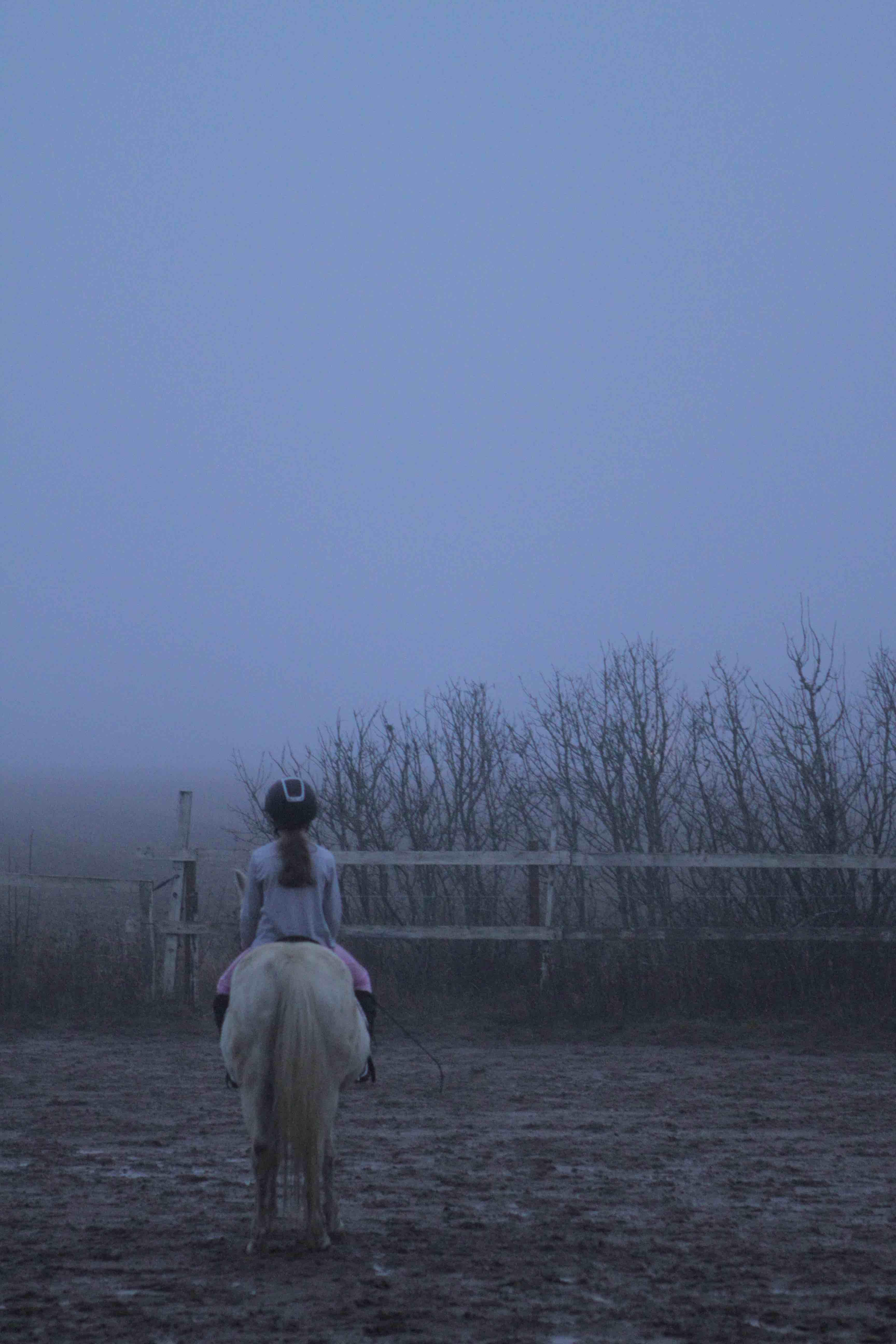 pony, pony riding, pony in fog, pony autumn, pony and girl