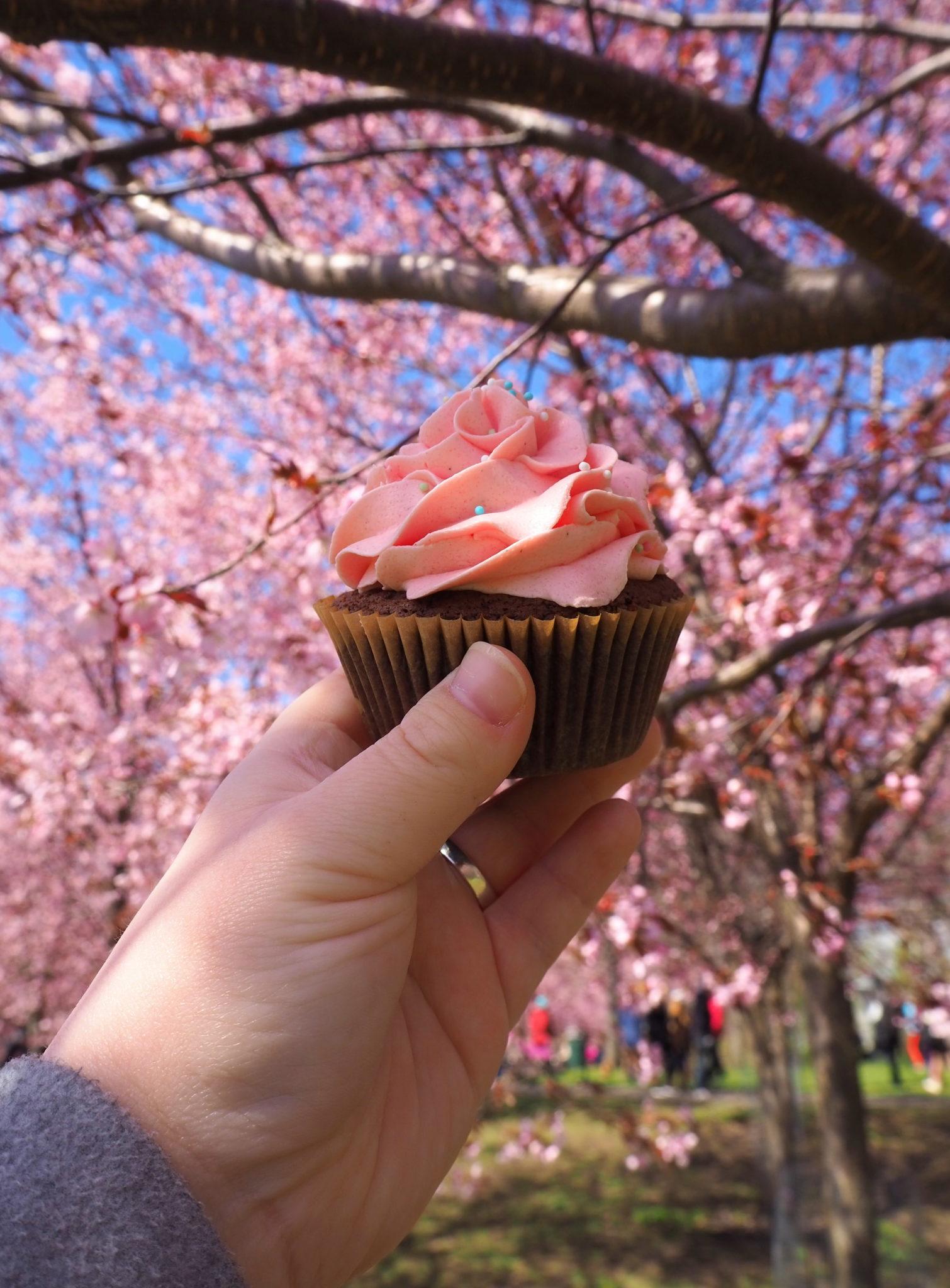 Vadelma-suklaa cupcakes