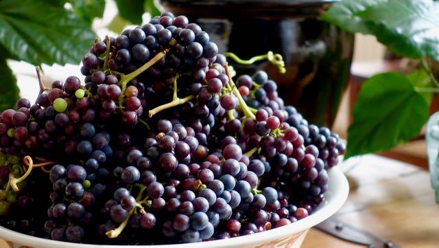 vati kukkuroillaan viinirypäleitä