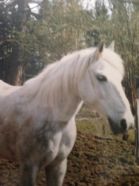 Hevostyttö Katja 12v