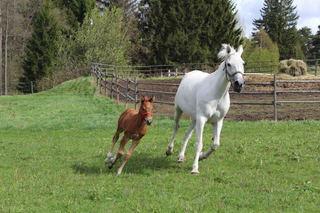Onnellisia hevosia