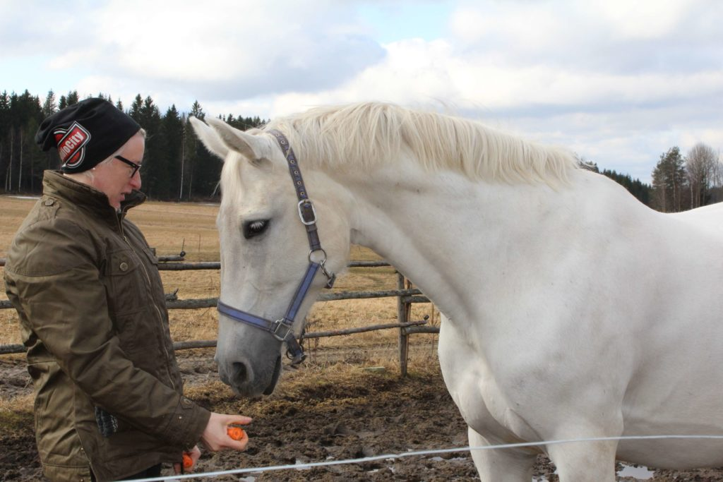 Maailman Hienoin Hevonen.