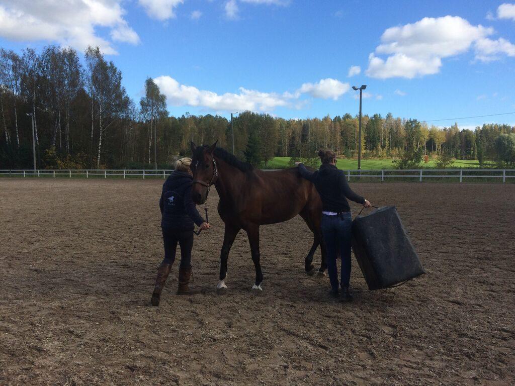Kiropraktikko jahtaa hevosta laatikon kanssa. Hevonen ei ole vielä varma kiropraktikon aikeista.