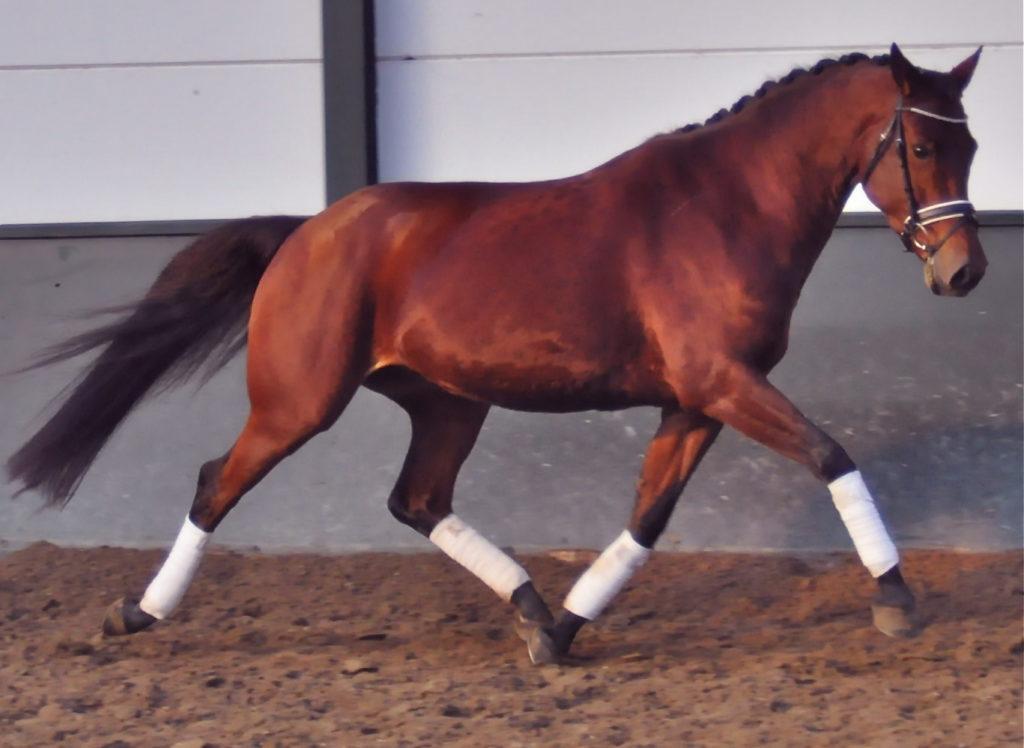 Voi hyvä ihme, onpas siinä tavattoman laadukkaan näköinen hevonen! Otetaan se!