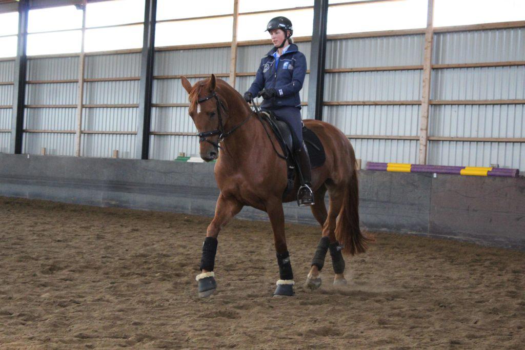 Ammatti-ihminen ja hevonen perikses, molemmat.