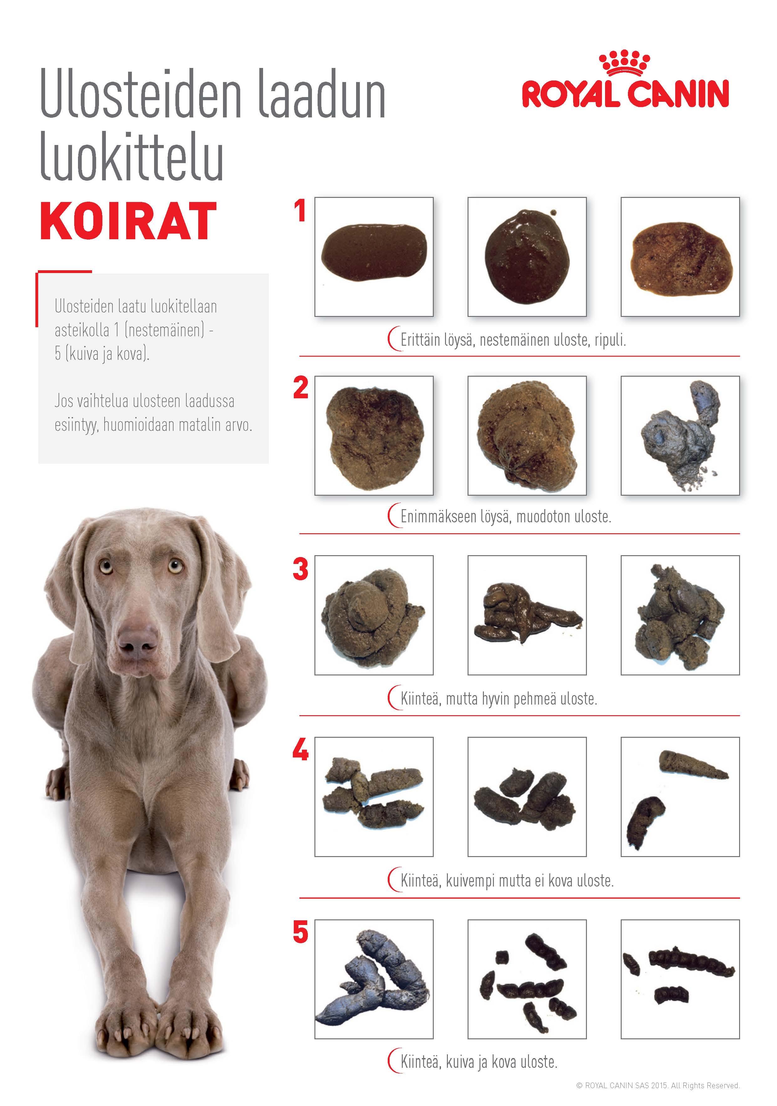 Koiran Suolistosyöpä