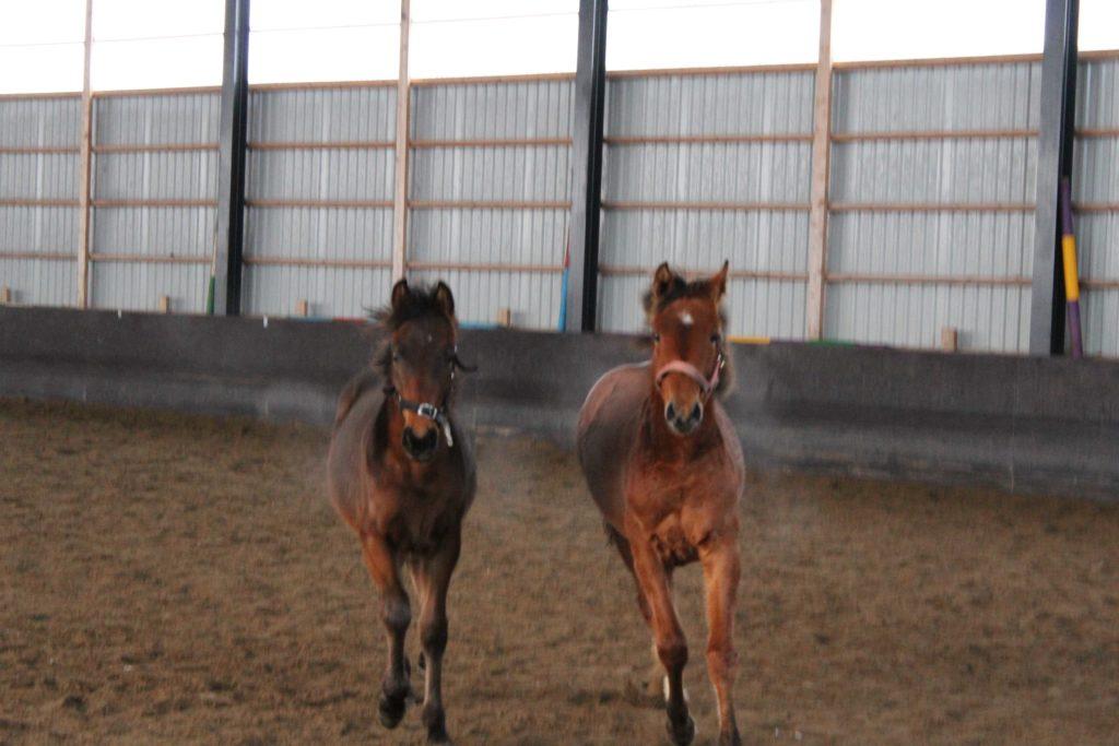 Iik, me ollaan isojen hevosten hallissa! Vasemmalla Kalle, oikealla Hilppa <3 foeva.