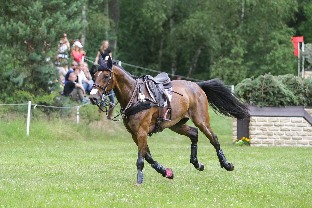FEI International Three Day Event Luhmühlen 2014, kuva: LudaStock