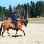 Pieni, hieno hevoseni ja uudet housut