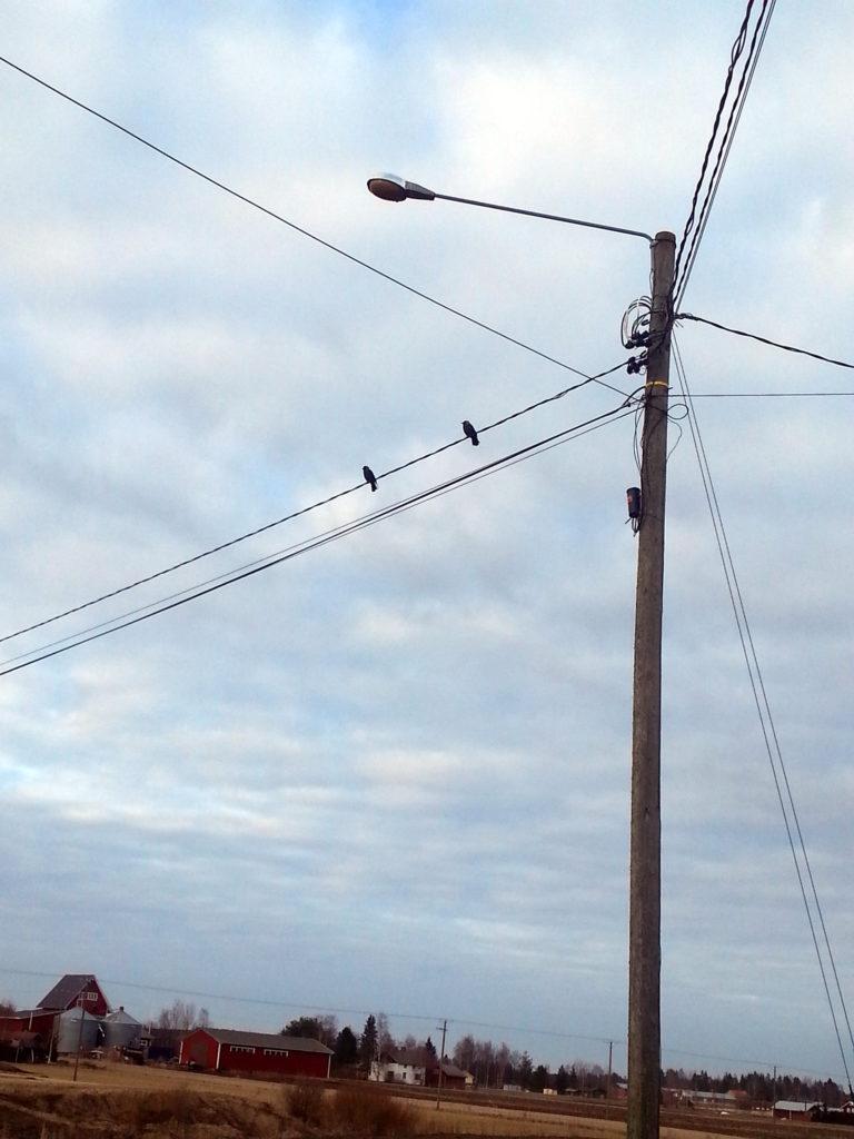 Linnut Pohjanmaalla 1