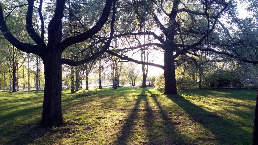 aurinko ja puut