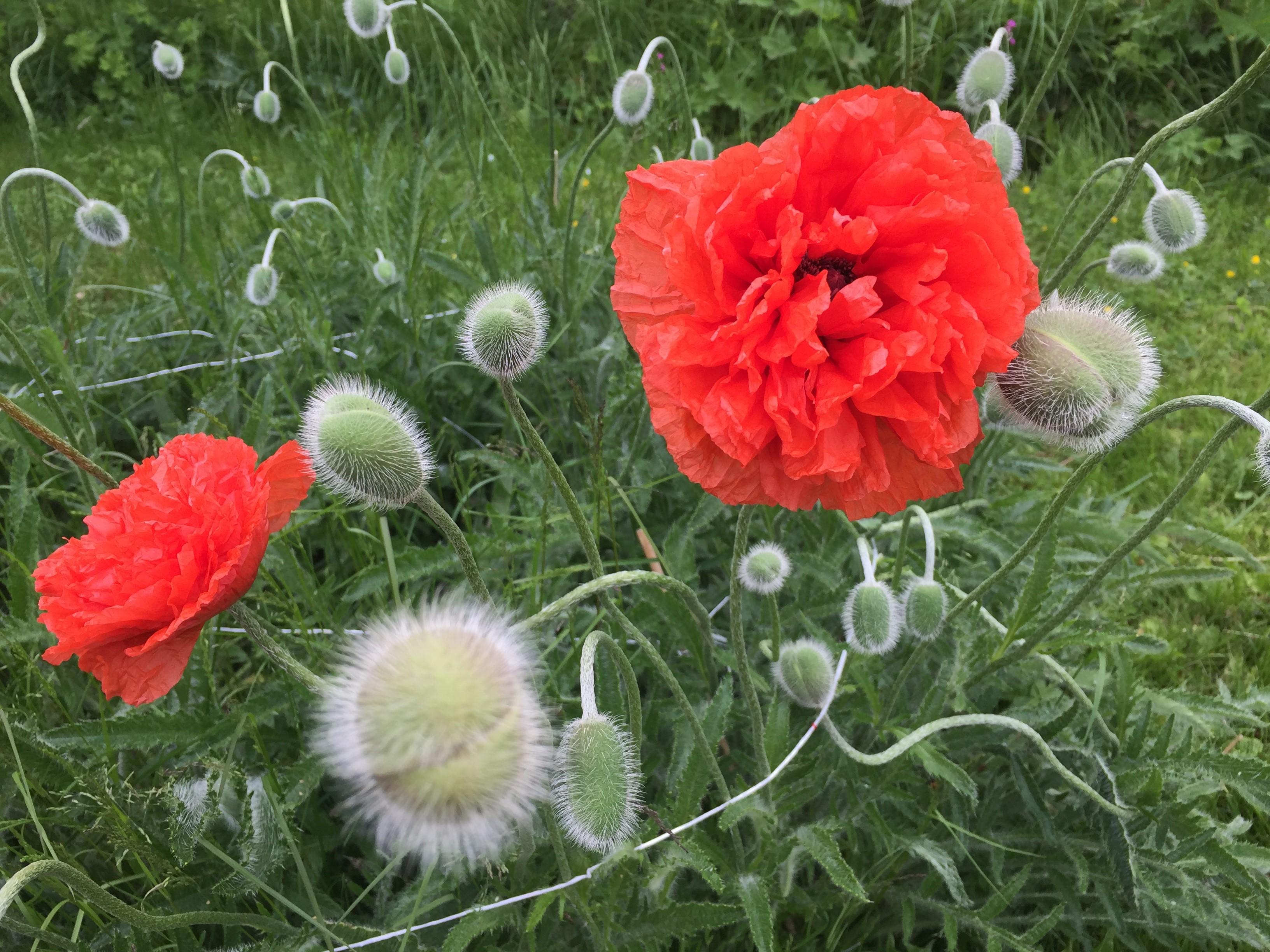 Matkahaaveenani olisi nähdä keväisiä kukkapeltoja.