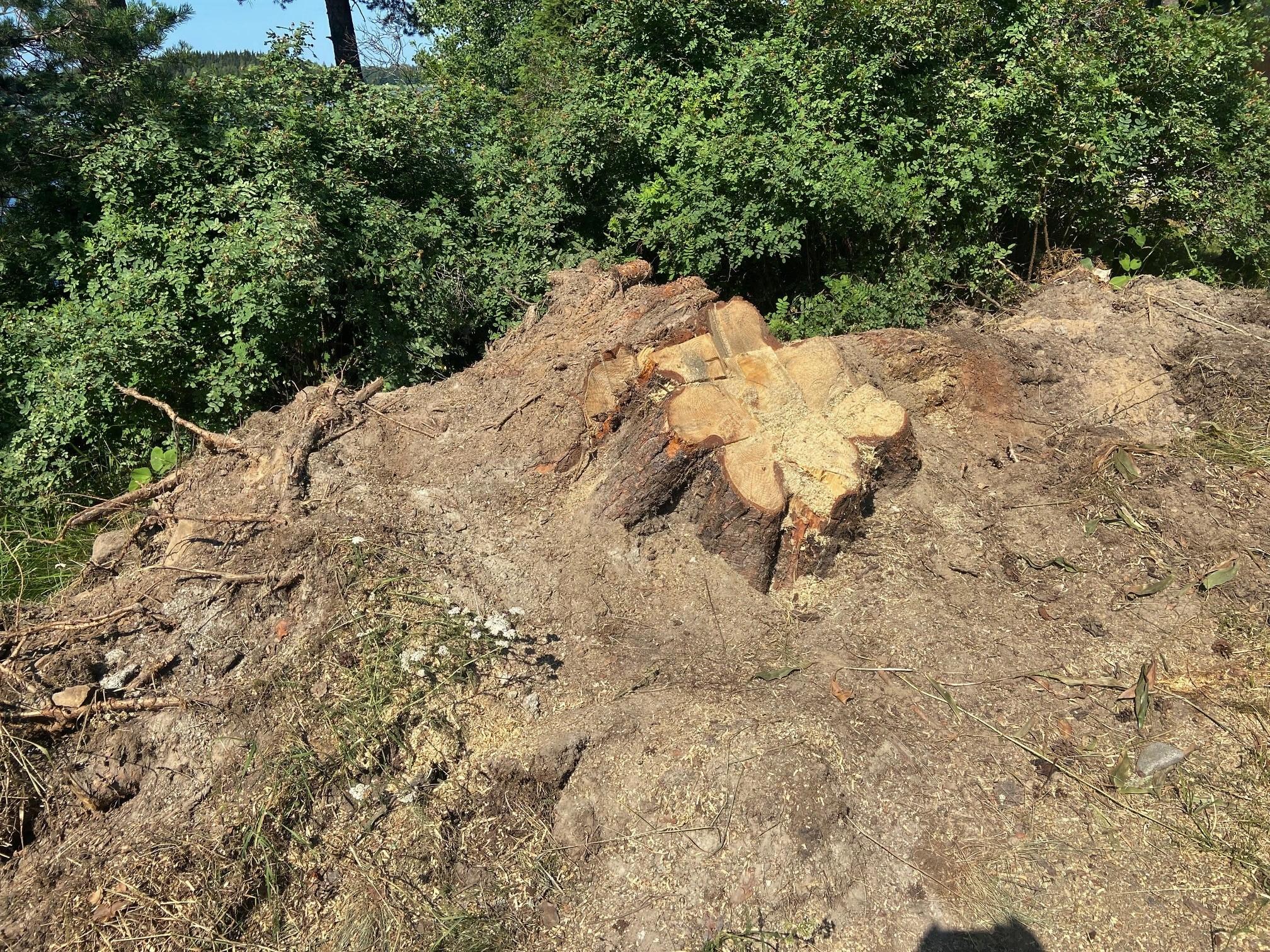 etätyö kesämäkillä - kaatunut puu