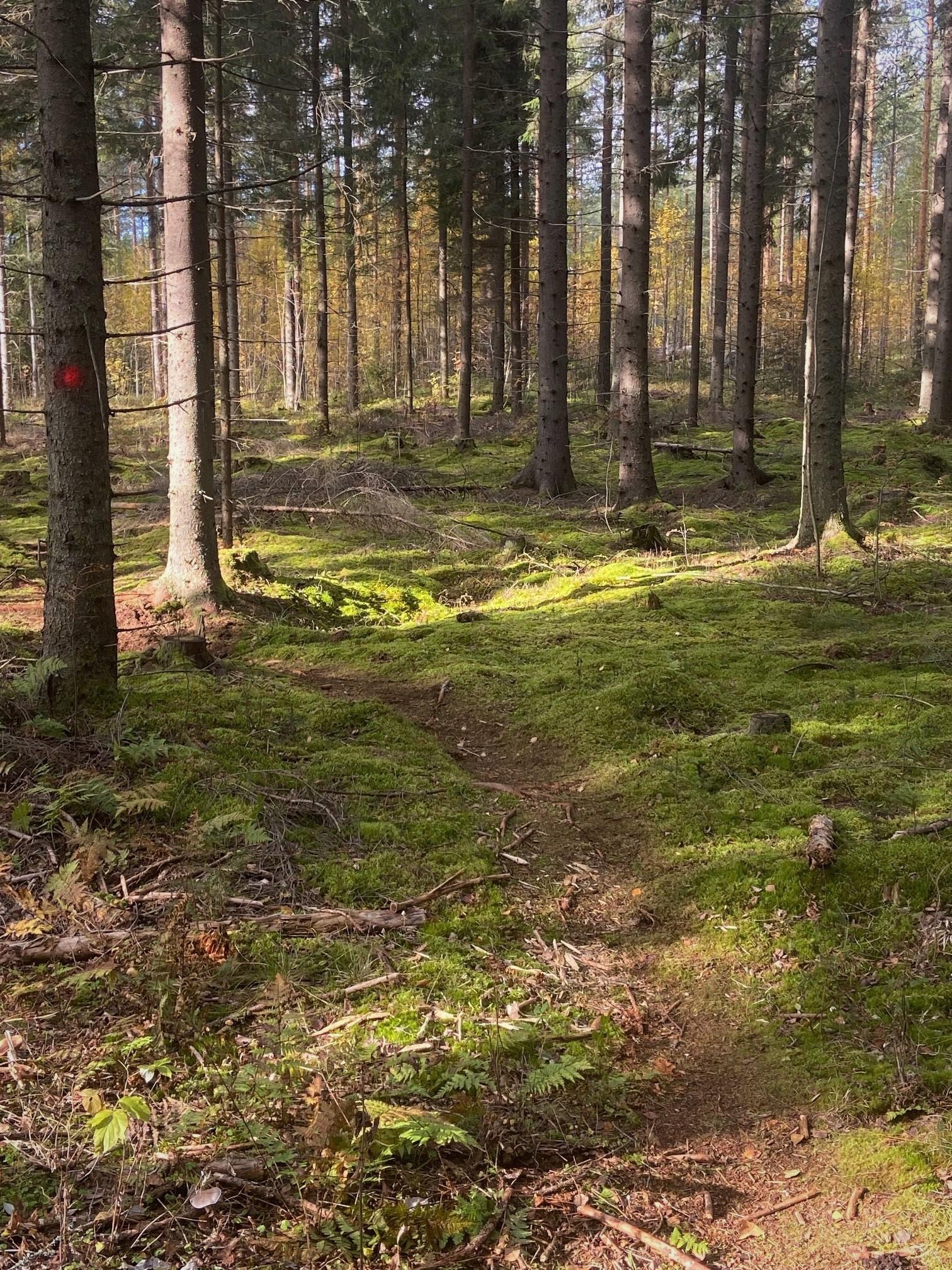 Metsäkävely