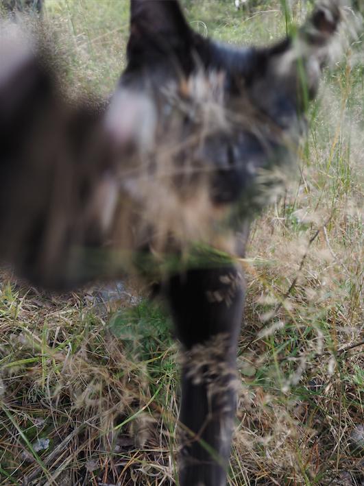 eläinten kuvaaminen