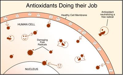 Antioksidanttitesti