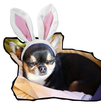 Viivi_bunny