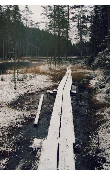 """Induktioviikko 2 – lauantai – """"jos metsään haluat mennä nyt"""""""
