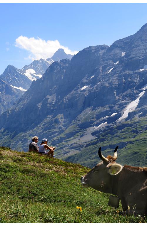 Sveitsi_KleineScheidegg_IMG_6341