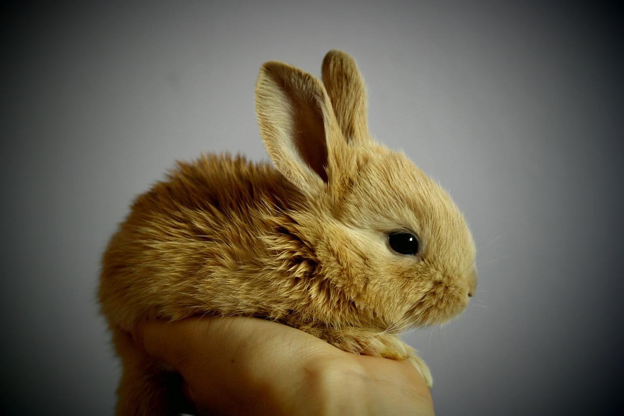 Kiina kosmetiikan eläinkokeet Ostolakossa
