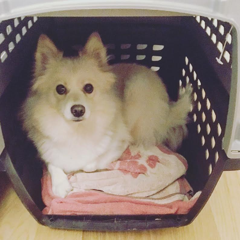 koiran-kuljetuslaatikko