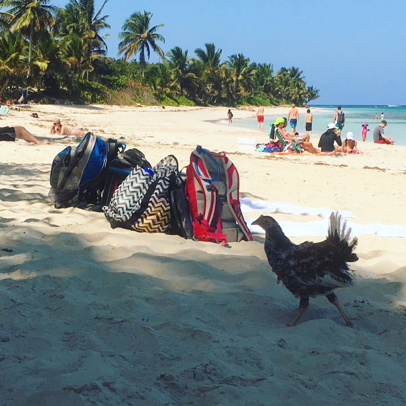 falemnco-beach-puerto-rico