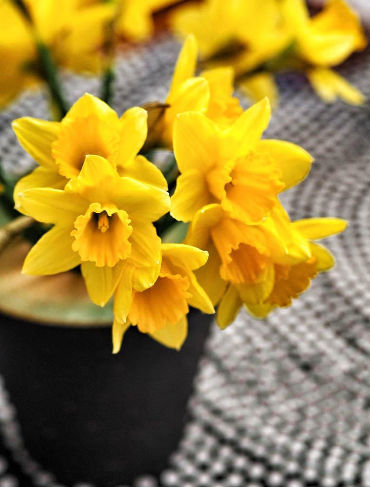 Keltaiset narsissit sopivat kevääseen