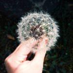 Introvertin herkkyys ja ihannetila