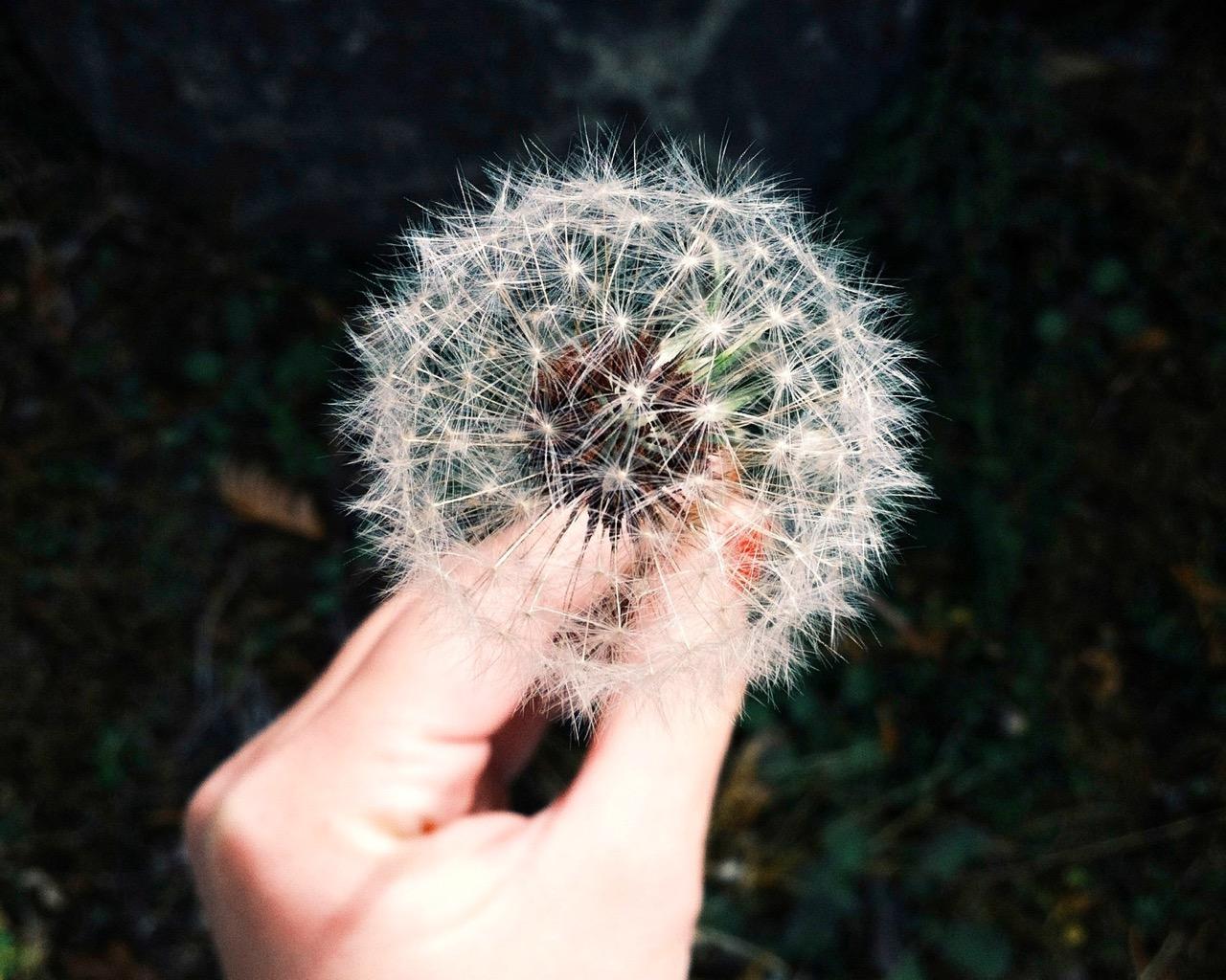 introvertti ja erityisherkkä