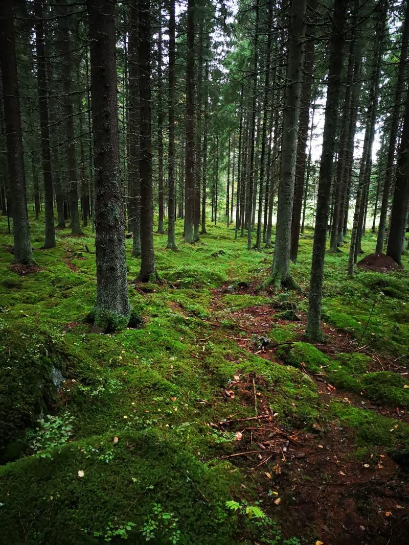 stressi rentoutuminen terve.fi luonto ulkoilu liikunta