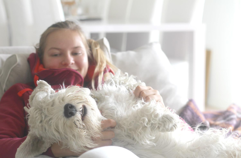 Oma koira vai matkustelua – vai molemmat?
